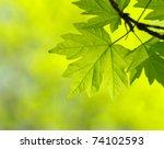 green leaves on the green...   Shutterstock . vector #74102593