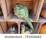 Green Gourds Or Squashes In...