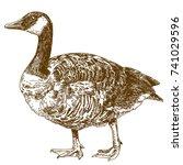 vector antique engraving...   Shutterstock .eps vector #741029596