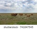 Excessive Grazing Of Animals In ...