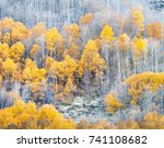 Yellow Aspens And Colorful...