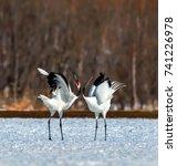 red crowned crane   Shutterstock . vector #741226978