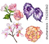 Wildflower Begonia Flower In A...