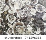 real stone texture background.... | Shutterstock . vector #741296386