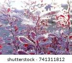 frozen morning bush.  frosty... | Shutterstock . vector #741311812