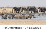 groups of zebra and elephants... | Shutterstock . vector #741313096