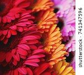 colors. flowers. gradient.