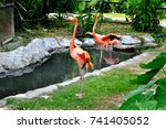 flamingo orange in the forest. | Shutterstock . vector #741405052