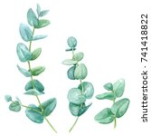 green leaves eucalyptus on... | Shutterstock . vector #741418822