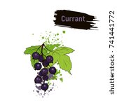 picture of the ripe currant.... | Shutterstock . vector #741441772