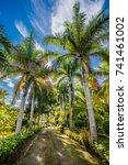 tropical palms | Shutterstock . vector #741461002