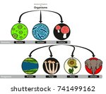 domain and kingdoms of... | Shutterstock .eps vector #741499162
