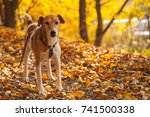 autumn in nature with dog... | Shutterstock . vector #741500338