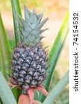 pineapple. | Shutterstock . vector #74154532