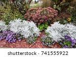 summer garden annuals... | Shutterstock . vector #741555922
