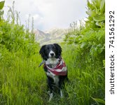 Small photo of A dog perched within plants and greenery with mountains seen in the distance.