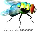 dung fly insect isolated vector ... | Shutterstock .eps vector #741600805