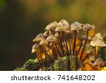 forest mushrooms in the grass.... | Shutterstock . vector #741648202