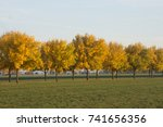 a line of golden trees in the... | Shutterstock . vector #741656356