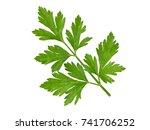 parsley leaf. parsley  bunch... | Shutterstock . vector #741706252
