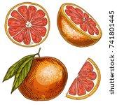 grapefruit  half of fruit ... | Shutterstock .eps vector #741801445
