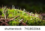 macro moss | Shutterstock . vector #741802066