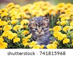 little sitting in flowers... | Shutterstock . vector #741815968