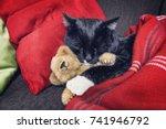 black and white tuxedo cat... | Shutterstock . vector #741946792