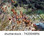 dried wild flowers in sunlight   Shutterstock . vector #742004896