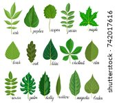 Vector Green Leaves Of...