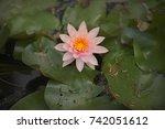 pink lotus   Shutterstock . vector #742051612