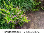 Small photo of A small tree grows and blooms on a Stone.(naturally have to adapt to survive concept).