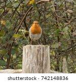 robin  erithacus rubecula ... | Shutterstock . vector #742148836