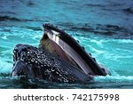 Whale Predation