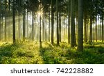 forest of spruce trees... | Shutterstock . vector #742228882