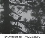 Silhouette Of Crows Wrinkled...