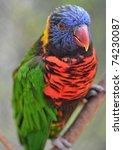 australian rainbow lorikeet ... | Shutterstock . vector #74230087