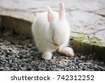 Stock photo baby rabbit 742312252