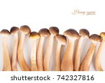 mushrooms close up. honey... | Shutterstock . vector #742327816