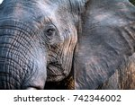 elephant close up and personal   Shutterstock . vector #742346002