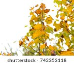 autumnal colorful photo... | Shutterstock . vector #742353118