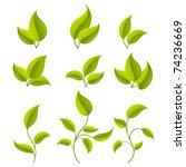 green leaves set. vector...   Shutterstock .eps vector #74236669