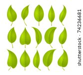 green leaves set. vector... | Shutterstock .eps vector #74236681