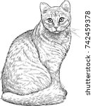 sketch of a house cat | Shutterstock .eps vector #742459378