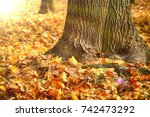 Autumn In The Park   Leaves...