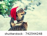 Stock photo dog wearing santa hat sitting with kitten outdoors in snow 742544248