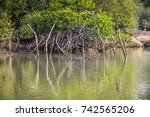 Palolem India  Mangroves ...
