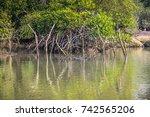 Palolem India  Mangroves ...