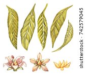 set of watercolor botanical... | Shutterstock . vector #742579045