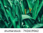 tropical foliage nature dark... | Shutterstock . vector #742619062